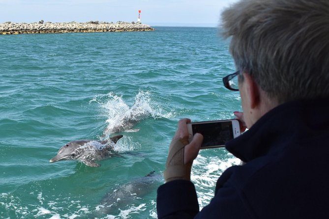 Mandurah Dolphin Island Adventure - Accommodation Search