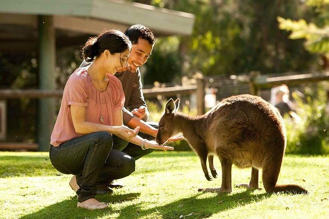 Very Best of Perth Tour - Wildlife Park  City Highlights Tour - Accommodation Search