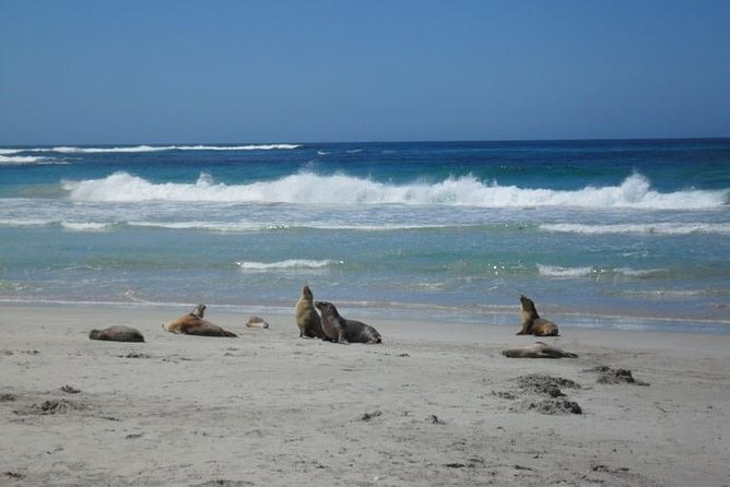 Kangaroo Island in a Day Tour from Adelaide - Accommodation Search