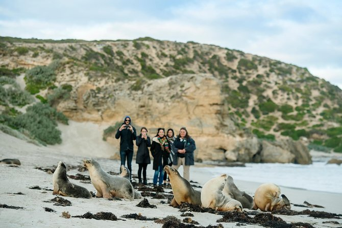 Small-Group Kangaroo Island 4WD Tour from Adelaide - Accommodation Search