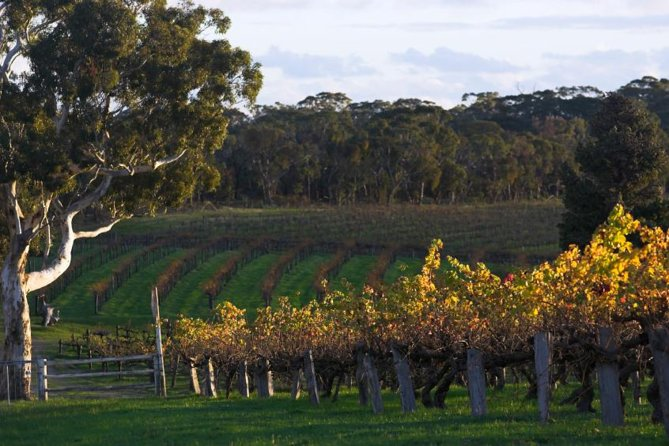 Barossa Valley with Hahndorf Tour from Adelaide - Accommodation Search
