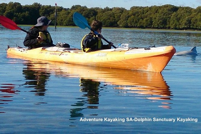 Dolphin Sanctuary and Ships Graveyard Kayak Tour - Accommodation Search