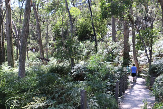 Self-Guided Waterfall Gully to Mount Lofty Hike from Adelaide - Accommodation Search