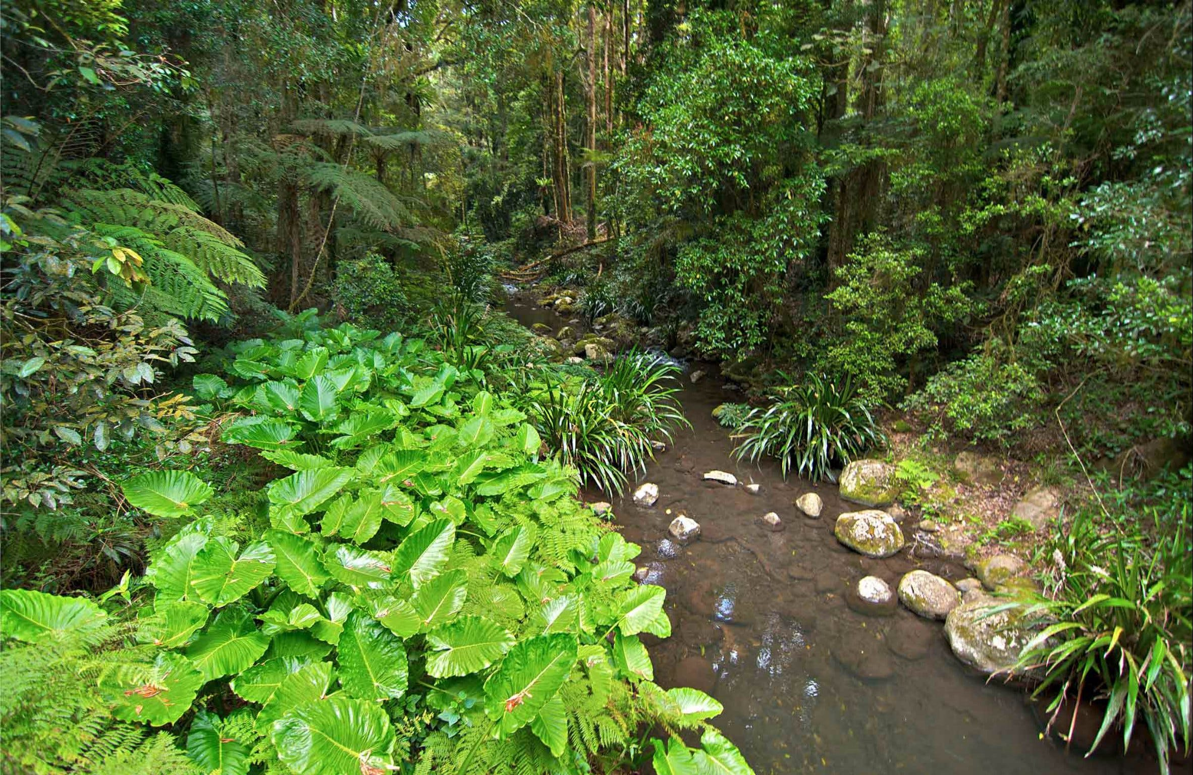 Brindle Creek Walking Track - Accommodation Search