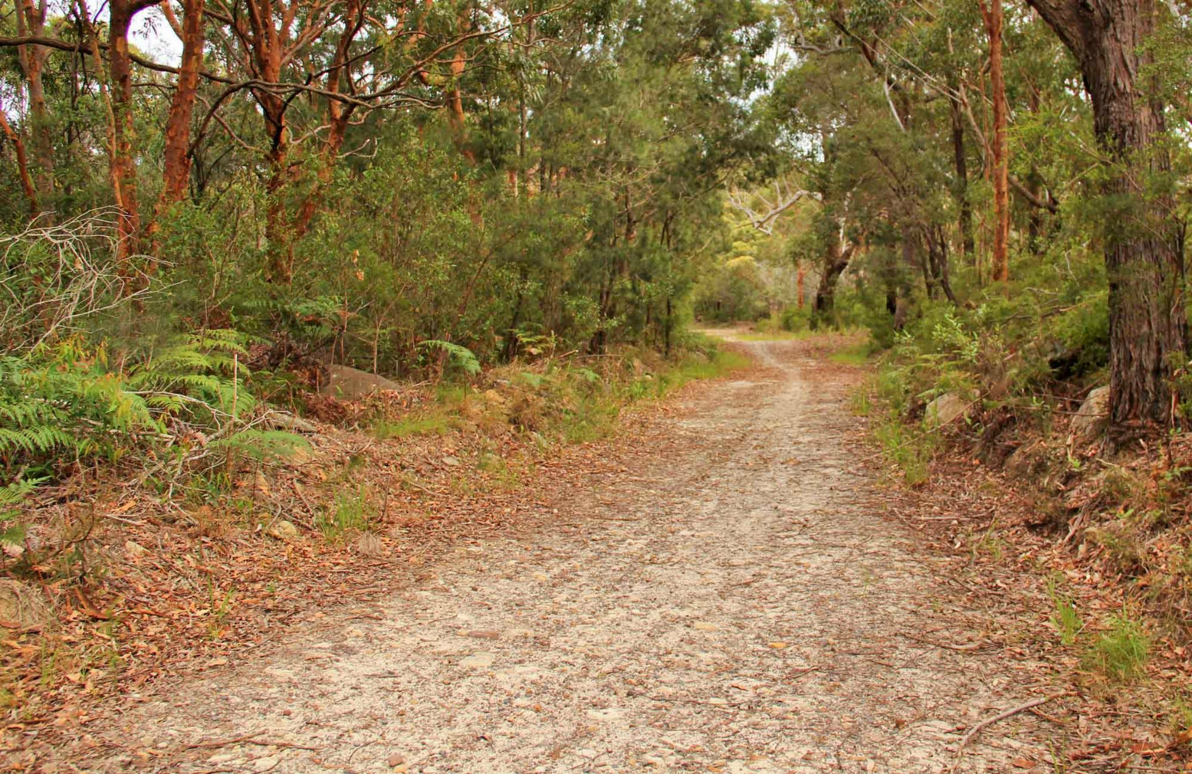 Daleys Point Walking Track - Accommodation Search