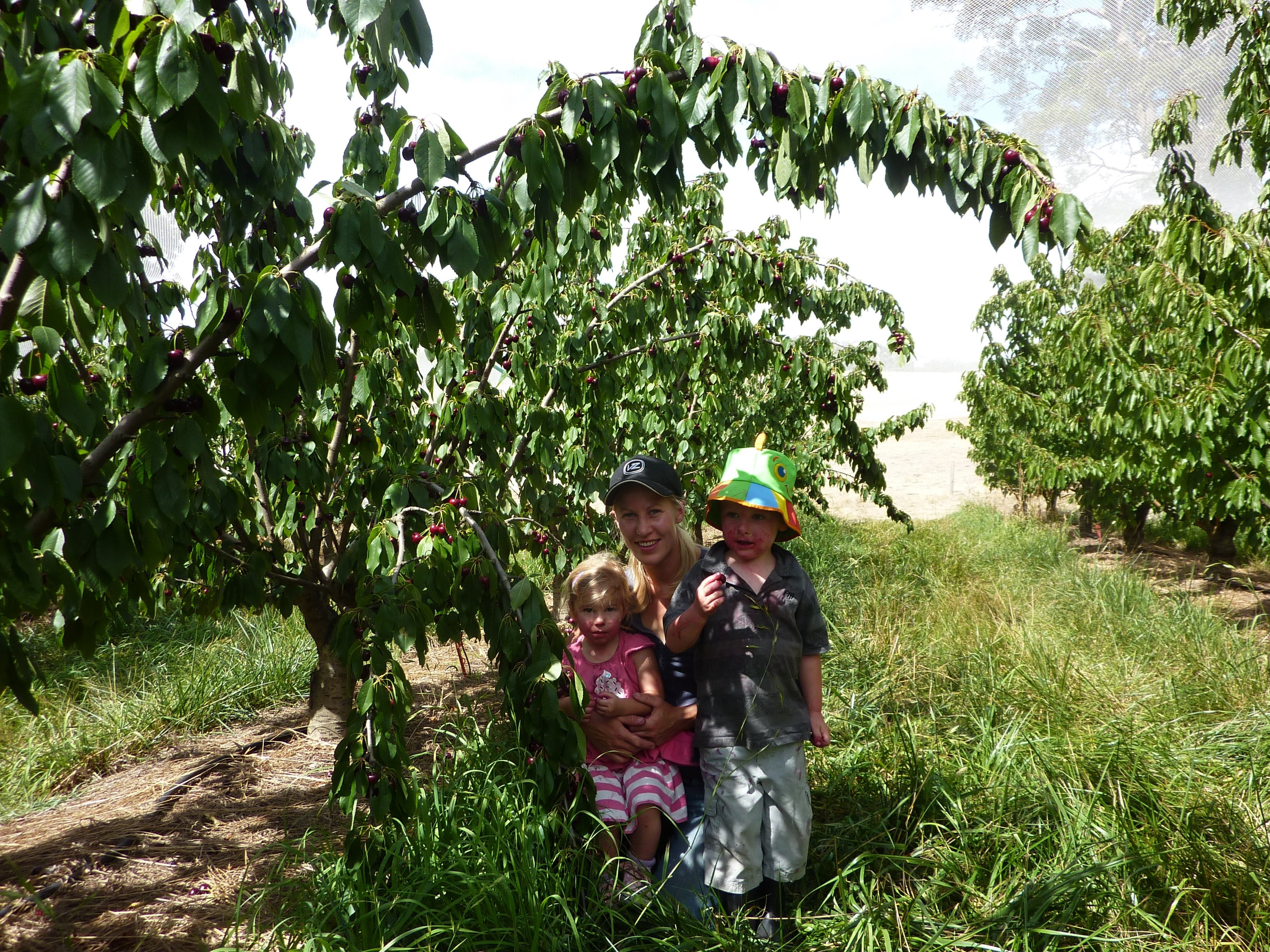Harben Vale Pick Your Own Cherries - Accommodation Search