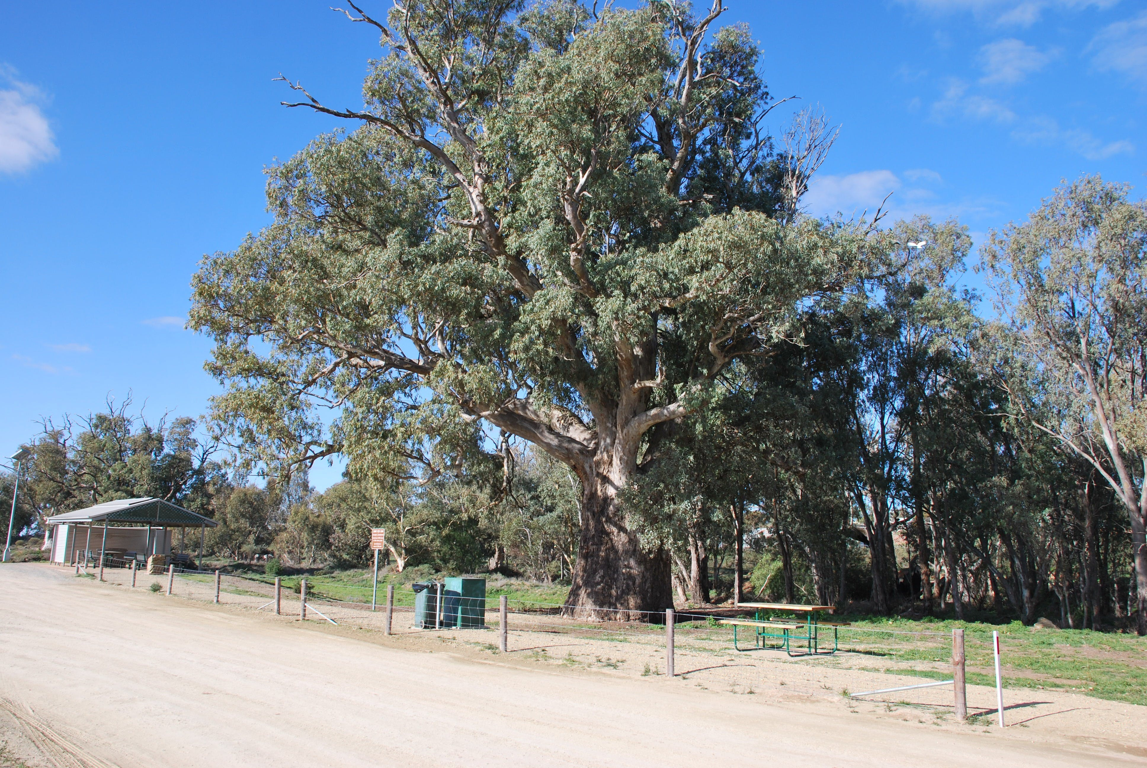 Giant Gum Tree - Accommodation Search
