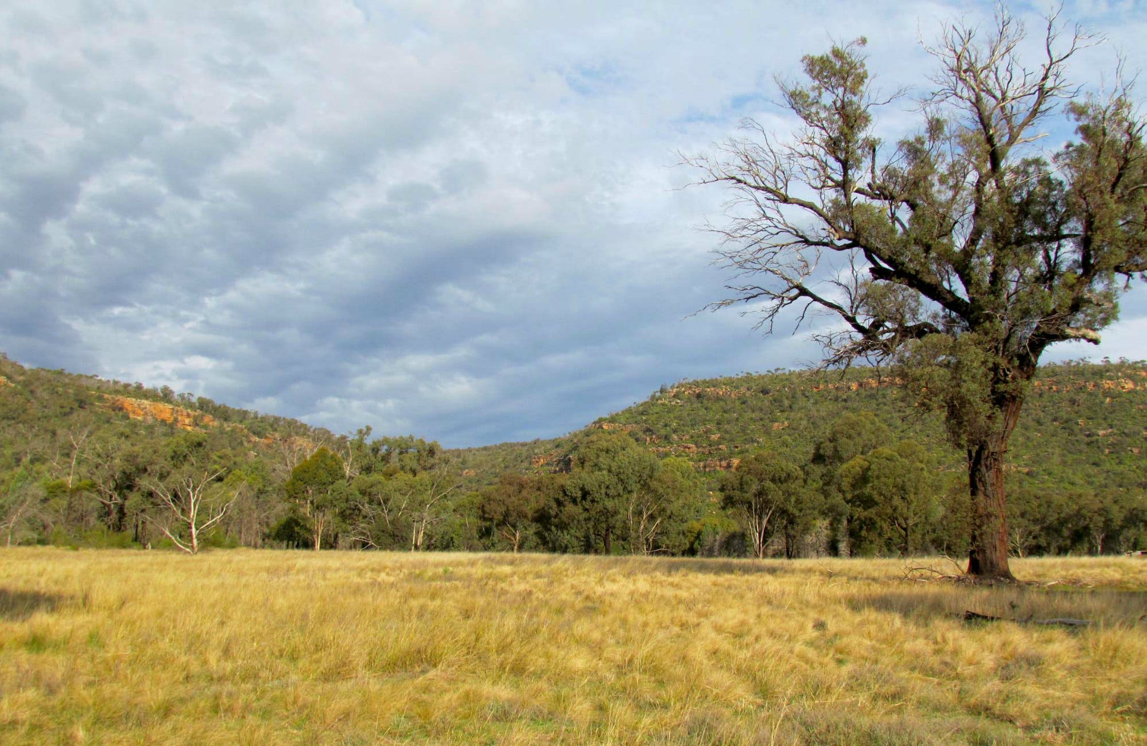 Weddin Mountains National Park - Accommodation Search
