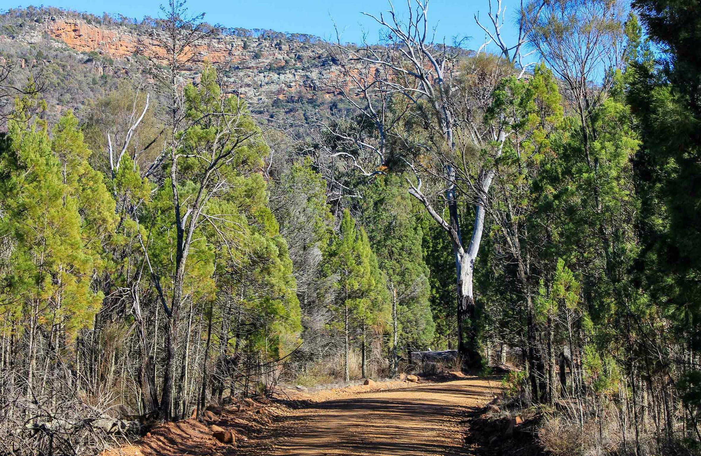 Weddin Gap to Black Spring Loop Trail - Accommodation Search