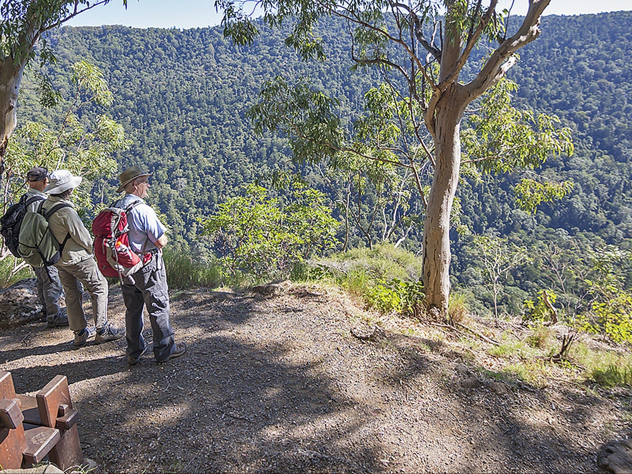 Caves circuit Lamington National Park - Accommodation Search