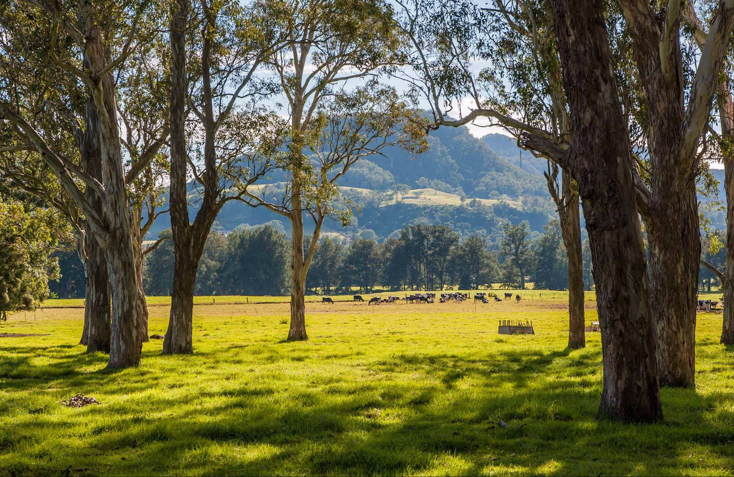 Coast to the Highlands Scenic Drive  Kangaroo Valley - Accommodation Search