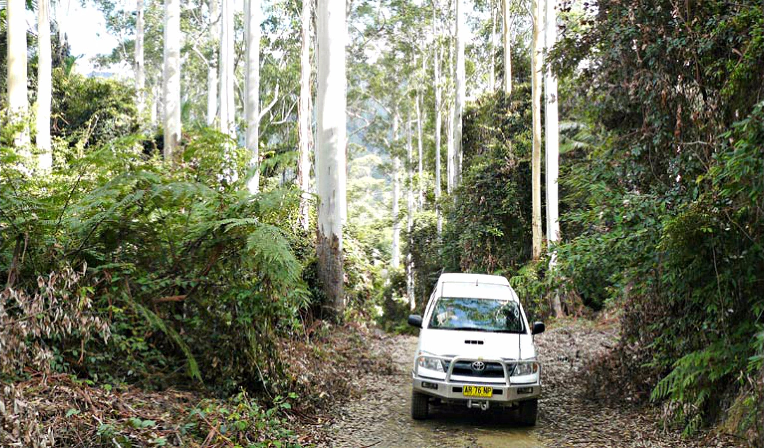 Orara Escarpment 4WD Touring Route - Accommodation Search