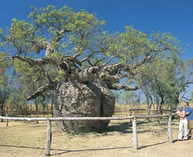 Boab Prison Tree - Accommodation Search
