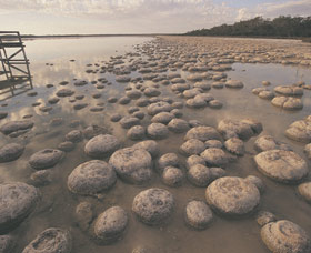 Lake Clifton Thrombolites - Accommodation Search