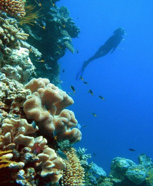 Reef Magic Cruises - Accommodation Search