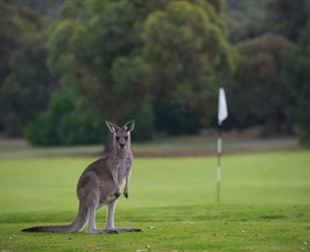 Anglesea Golf Club - Accommodation Search