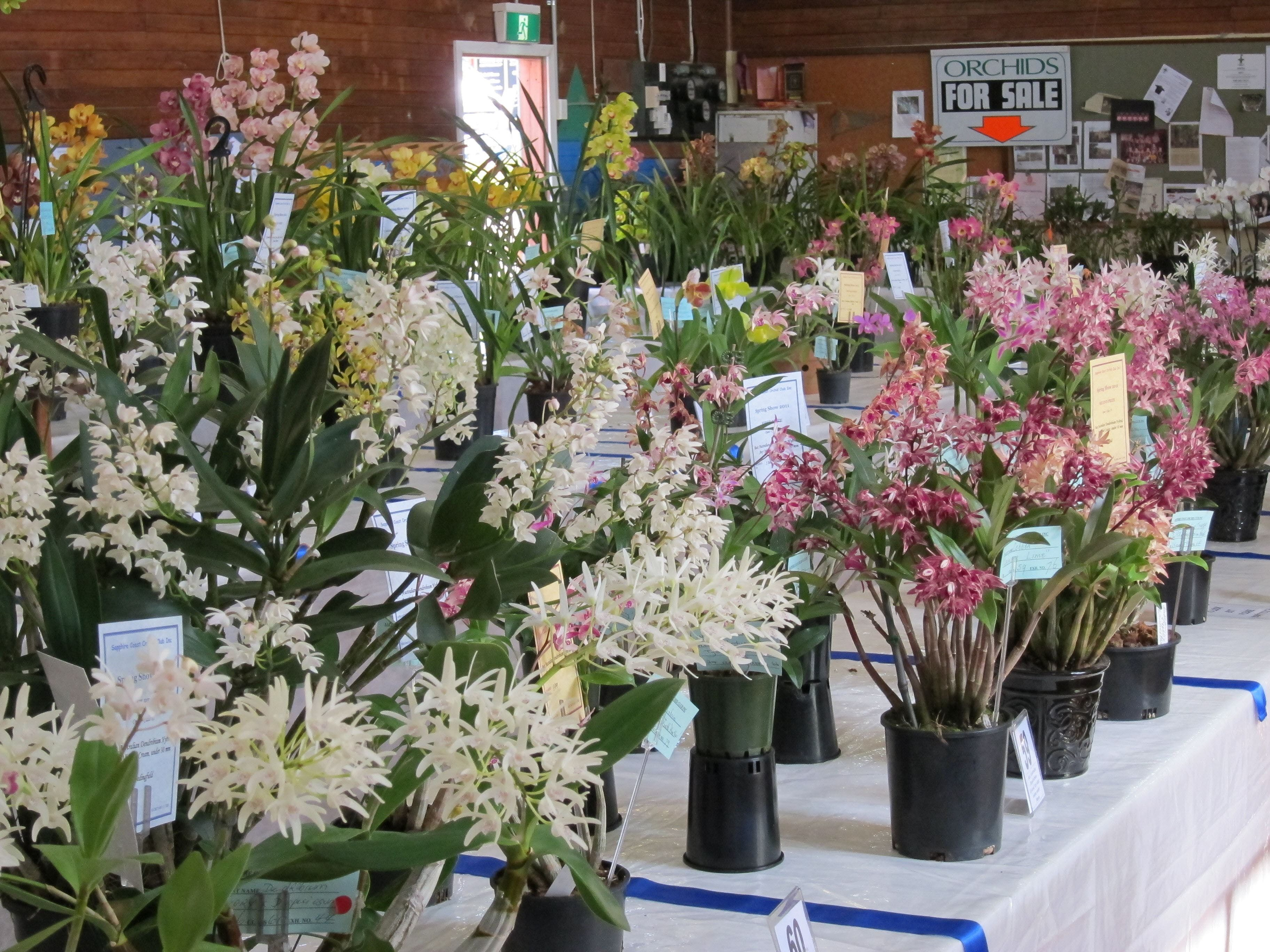 Sapphire Coast Orchid Club Spring Orchid Show - Accommodation Search