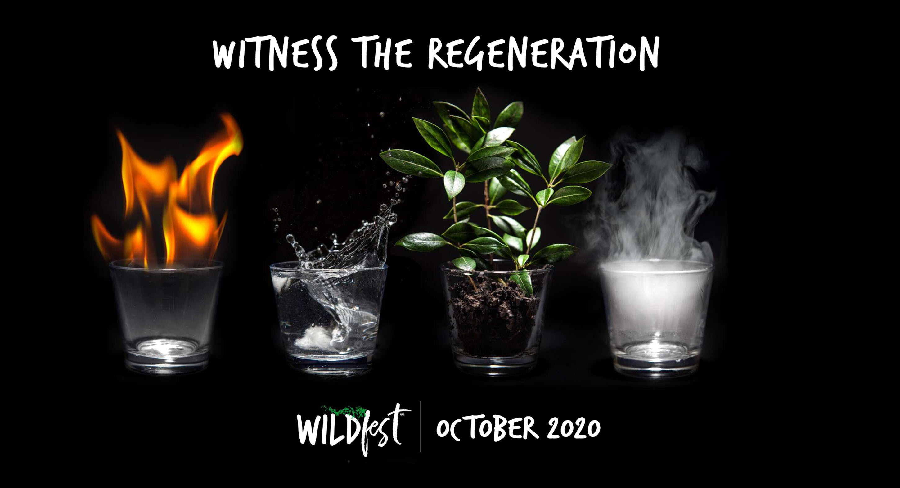 Wildfest - Annual Festival - Accommodation Search