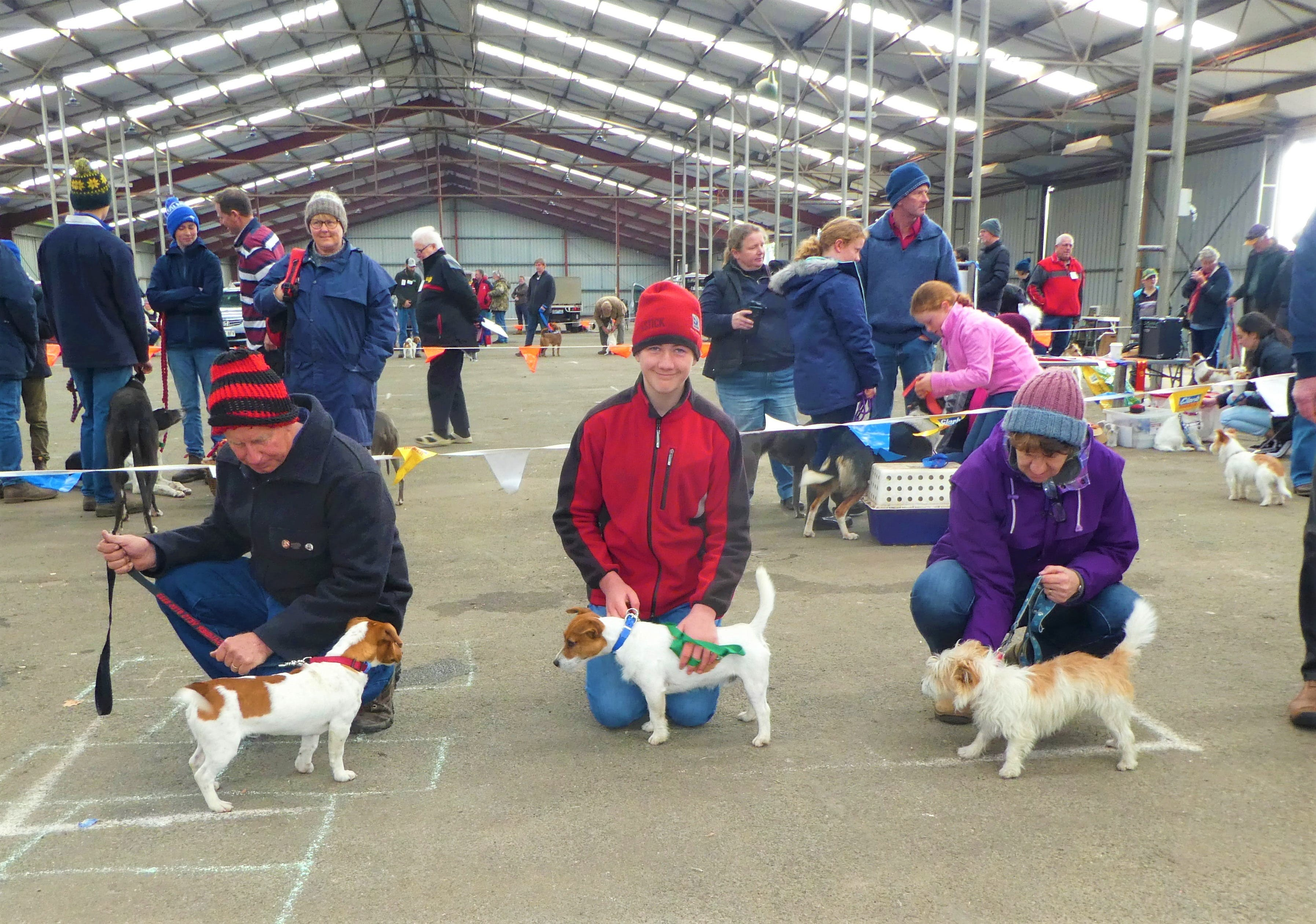 Hamilton Jack Russell Terrier and Hunting Dog Show - Accommodation Search