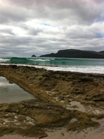 Bruny Island Berry Farm - Accommodation Search